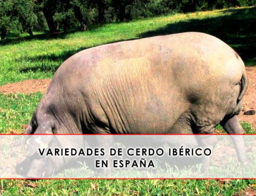 Variedades de cerdo ibérico en España