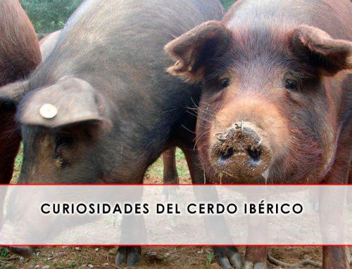 Curiosidades del cerdo ibérico