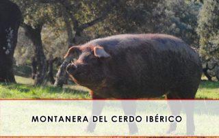 montanera del cerdo ibérico