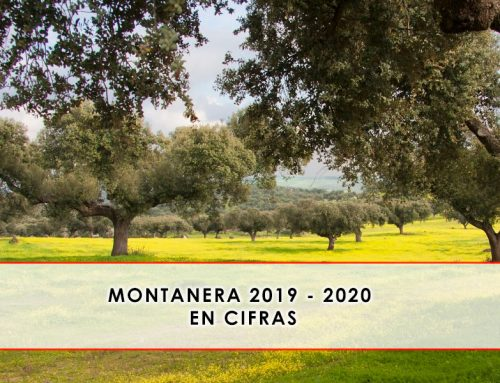 Montanera 2019 – 2020