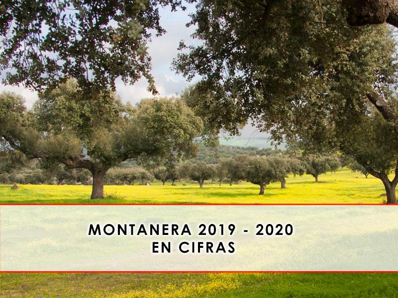 montanera 2019 - 2020 en cifras