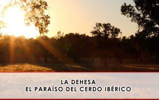 La dehesa, el paraíso del cerdo ibérico - Grupo Julián Becerro