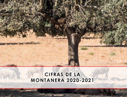 Montanera 2020-2021