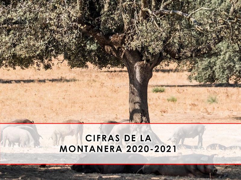 montanera 2020-2021 Grupo Julián Becerro